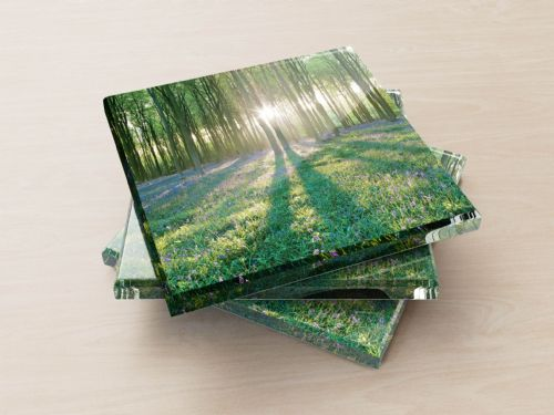 Micheldever Wood, Hampshire - Glass Coasters